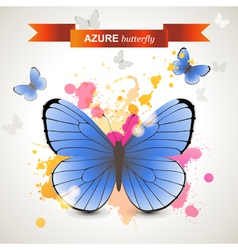 Azure butterfly vector