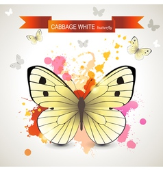 Cabbage white butterfly vector