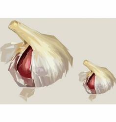 Garlic clove artistic render vector