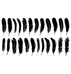 Set of different feathers vector