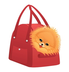 Happy pomeranian spitz vector