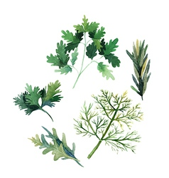 Water color herbs fennel parsley rosemary and arug vector