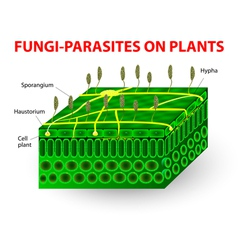 Fungi parasites on plants vector