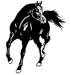 Arabian horse black white vector