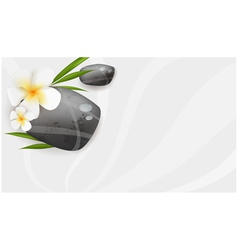 Spa background with stones and flowers vector