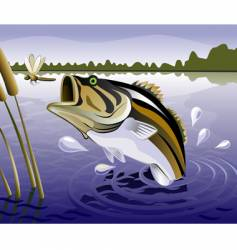 Fresh water fish vector