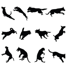 Jumping dogs vector