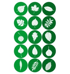 Set of abstract leaf icons vector