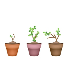 Bonsai trees and green plants in ceramic pots vector