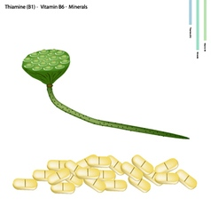 Lotus seed pods with vitamin b1 and vitamin b6 vector