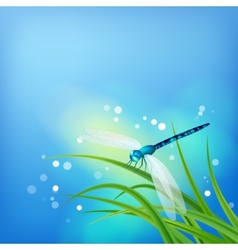 Dragonfly on grass blade vector