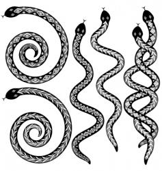 Snake designs vector