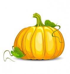 Big pumpkin vector