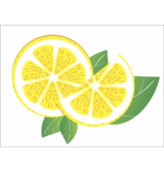 Lemons on the white background vector