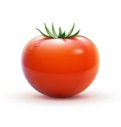 Red fresh tomato vector