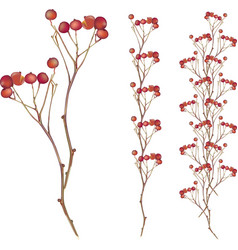 Autumn red berry tree vector