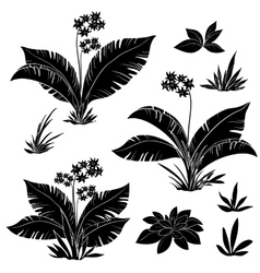 Flowers and grass set silhouettes vector
