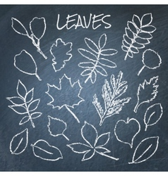 Collection of chalk leaves vector