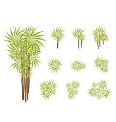 A set of isometric yucca tree or dracaena plant vector
