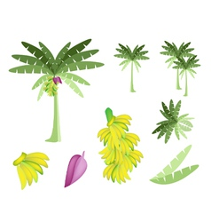 Set of banana tree with bananas and blossom vector