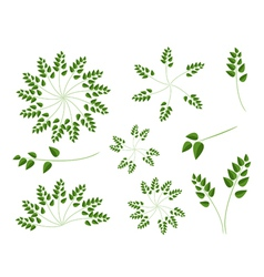 A set of evergreen leaves on white background vector