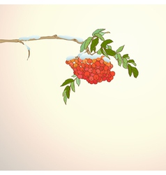Background with rowan branch vector