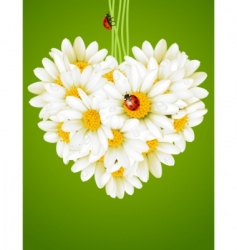 Floral love card chamomile heart vector