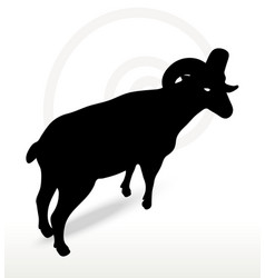 Big horn sheep silhouette in twist head pose vector