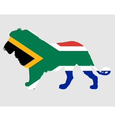Lion south africa vector