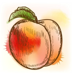 Peach watercolor painting vector