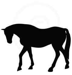 Horse silhouette in walking head down vector