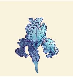 Iris flower vector