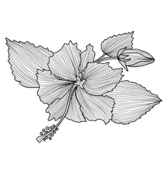 Decorative hibiscus vector