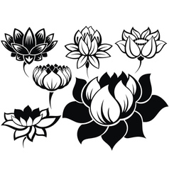 Set of lotuses vector