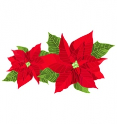 Christmas decoration poinsettia vector