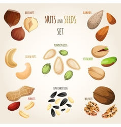 Nut mix set vector