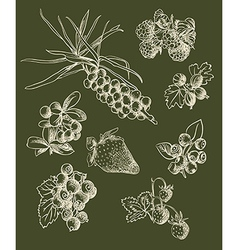 Set of berry sketches vector