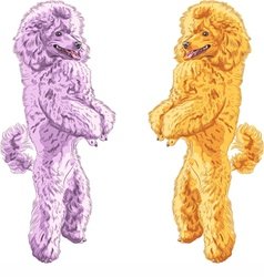 Poodles standing on his hind legs vector