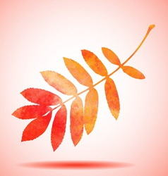 Orange watercolor painted rowan tree leaf vector