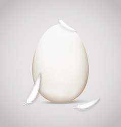 Egg in feathers vector
