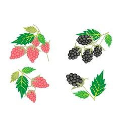 Set of raspberry and blackberry vector