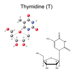 Chemical formula and model of thymidine vector