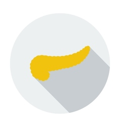 Pancreas icon vector