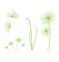 A set of cyperus papyrus plant on white background vector