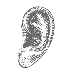 Human ear in engraved style vector