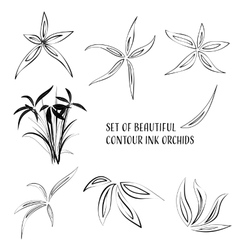 Contour ink flowers vector