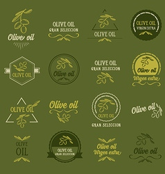 Olive oil design concept great selection vector