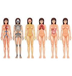 Body system vector
