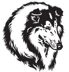 Collie head black white vector
