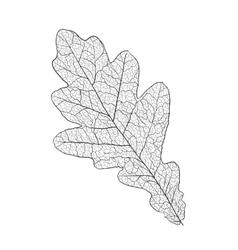 Oak leaf skeleton vector